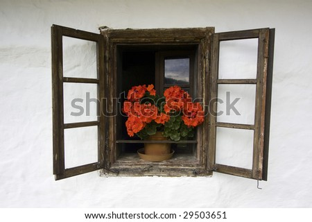 Very old window with geranium