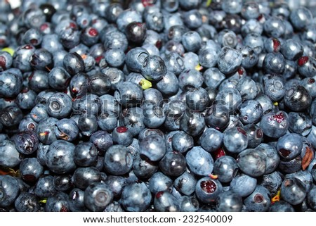Very ripe fresh blueberries close up at shallow depth of field - stock photo