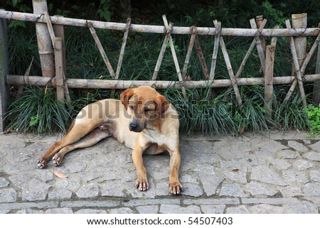 Very sad dog in front of wooden fence