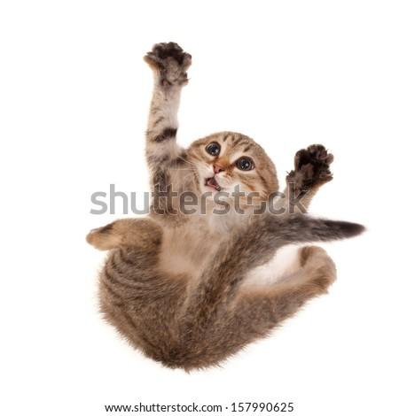 Very scared kitten - stock photo