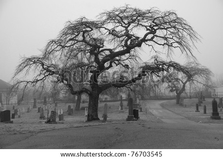 Very scary looking tree in a graveyard,  Taken on a foggy afternoon for scary atmosphere.