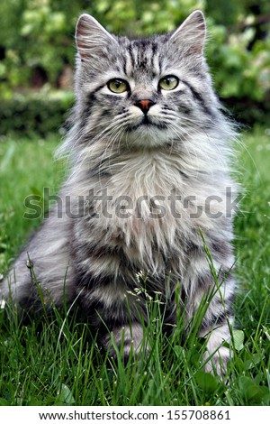 Very serious looking kitten sitting in the grass.