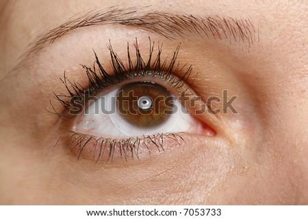 very sharp and detail macro of eye - stock photo