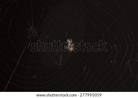 very small spider - stock photo