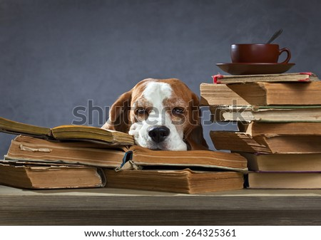 Very smart dog ponders in the library
