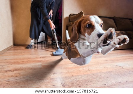 Very terrible vacuum cleaner , focus on dog head - stock photo