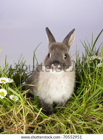 Very young gray easter bunny on a patch of grass - stock photo