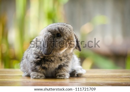 Very young rabbit on wood floor in the garden - stock photo