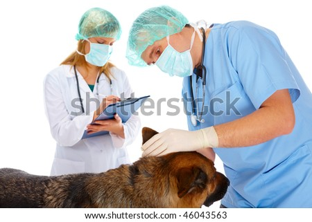 Vet and assistant examining dog, isolated on white - stock photo