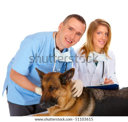 Vet and assistant examining dog, isolated on white