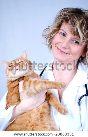 vet and cat - stock photo