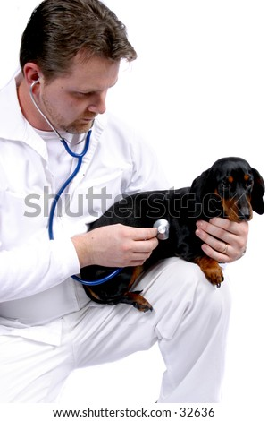 Vet and Dog 2 - stock photo