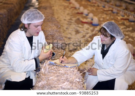 Vet and Farmer on Chicken Farm - stock photo