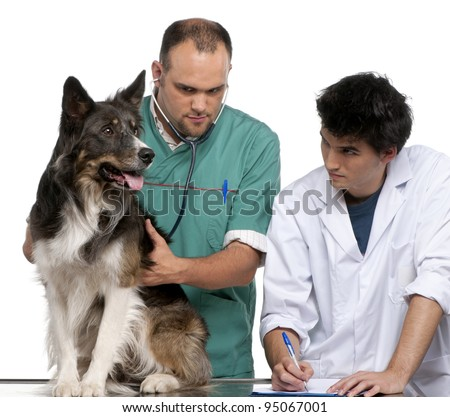 Vet and vet intern examining a border collie in front of white background