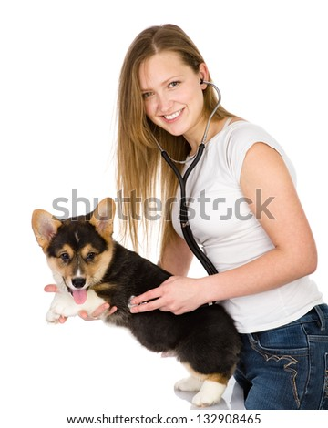 vet checking the heart rate of a adult Pembroke Welsh Corgi dog. looking at camera. isolated on white background - stock photo