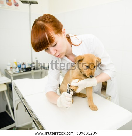 Vet cutting dog toenails - stock photo