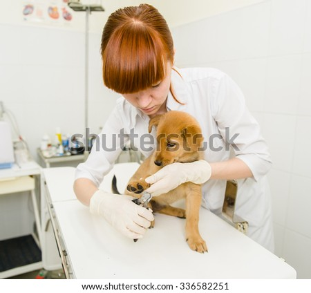 Vet cutting dog toenails