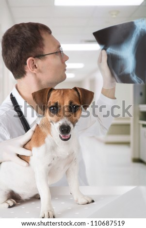Vet doctor with dog Jack Russell terrier is scrutinizing dog's X-ray in veterinary  clinic - stock photo