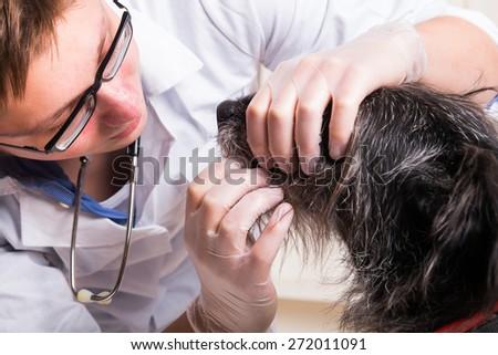Vet examines the dog's teeth - office shoot  - stock photo