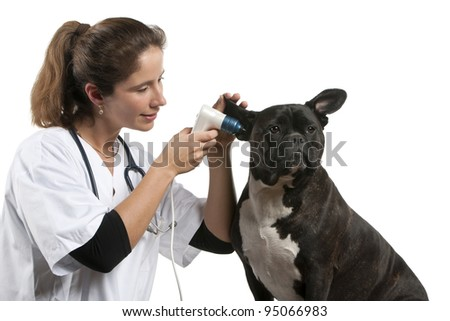 Vet examining a Crossbreed dog, dog with an otoscope in front of white background - stock photo