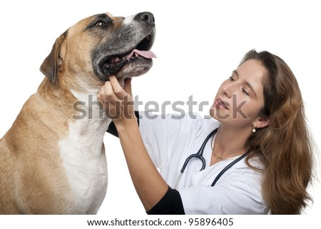 Vet examining a mixed-breed dog in front of white background