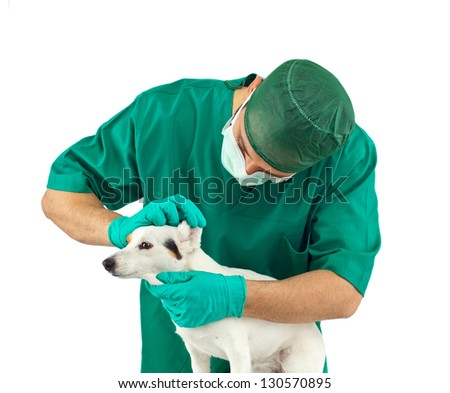 Vet examining an jack russell terrier - stock photo