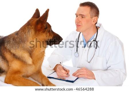 Vet examining dog, isolated on white - stock photo