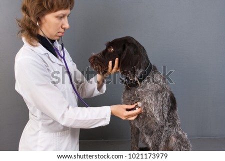 vet examining dog with stethoscope in veterinarian clinic