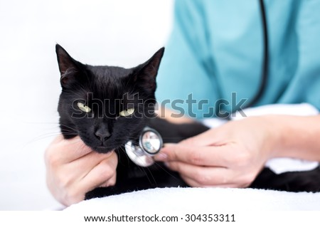 Vet Holding cat - stock photo