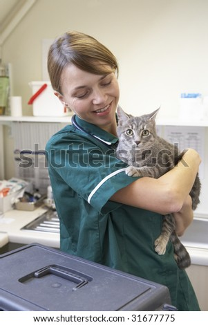 Vet Holding Cat In Surgery - stock photo