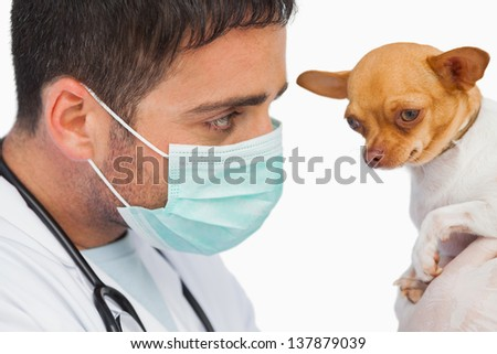 Vet holding chihuahua and wearing protective mask on white background