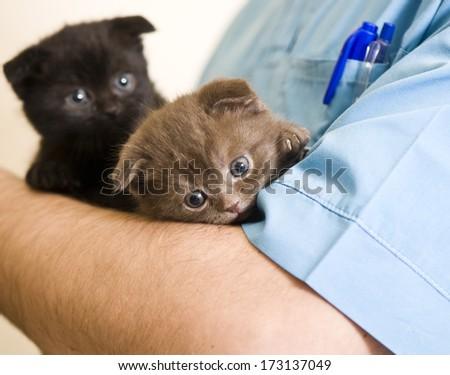 Vet holding kitten  - stock photo
