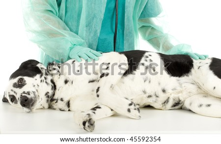 vet in green uniform and protective gloves with dog in surgery - stock photo