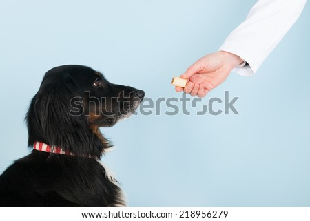 Vet is giving a reward to the brave dog - stock photo