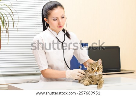 Vet  listens to kitten of breed of scottish straight - stock photo