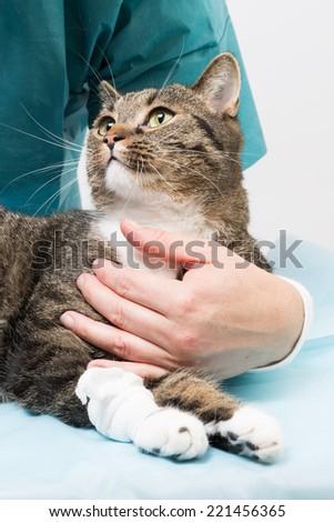 vet treatment - stock photo