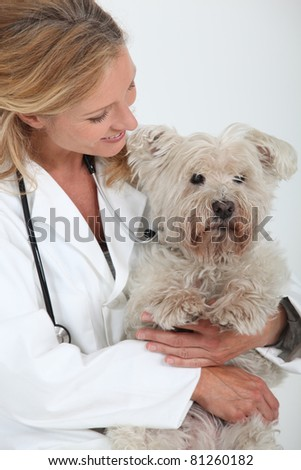 Vet with a dog - stock photo
