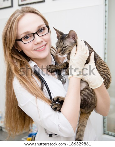 vet with cat in veterinary clinic - stock photo