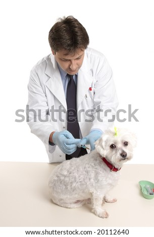 Veterinarian about to give a  small dog an injection.  white background. - stock photo