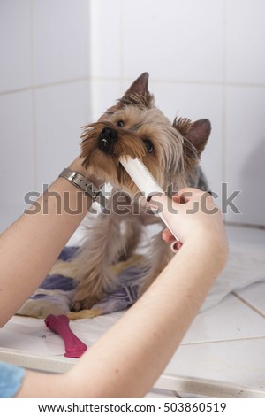 veterinarian administered medication dogs