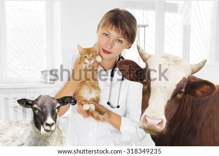 veterinarian and pets at the clinic - stock photo