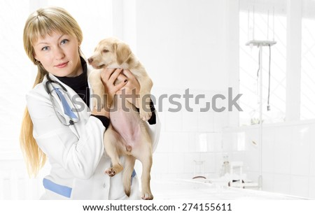 Veterinarian and Puppy in the clinic