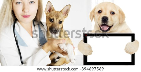 Veterinarian and Puppy in the clinic - stock photo
