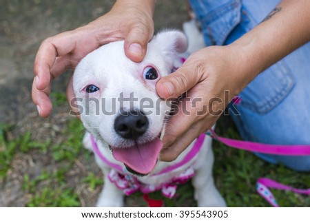 veterinarian check the dog's eyes. (cute small dog jack russell terrier) - stock photo
