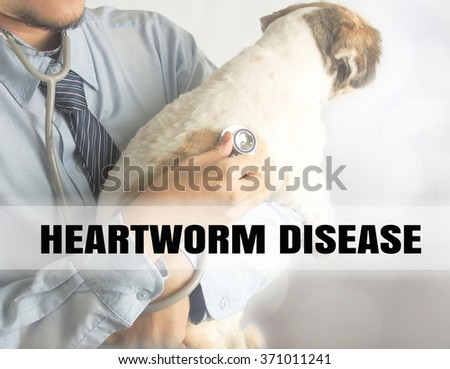 veterinarian checking up sick dog with stethoscope bokeh background word heart worm disease - stock photo