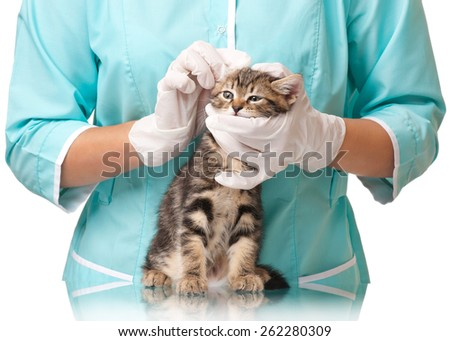 Veterinarian cleans ears to a small kitten close-up - stock photo