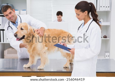 Veterinarian coworker examining a dog in medical office