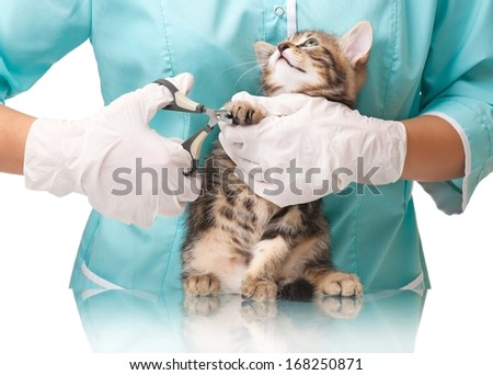 Veterinarian cuts claws to a small kitten close-up