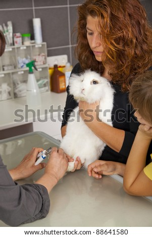 veterinarian cutting the claws of a domestic rabbit - stock photo