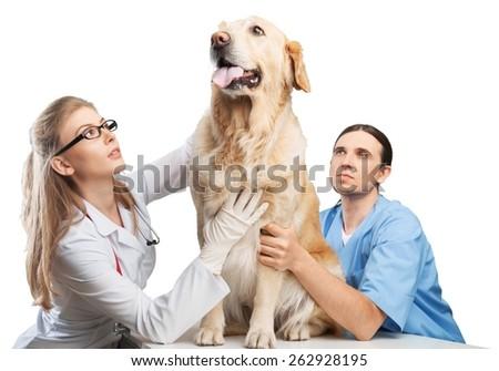 Veterinarian. Doctor examining a cute dog at the vet  - stock photo